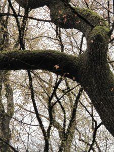 double branche
