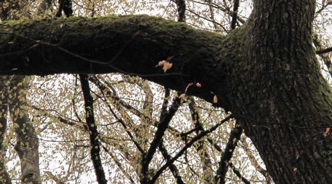 «Mon arbre»